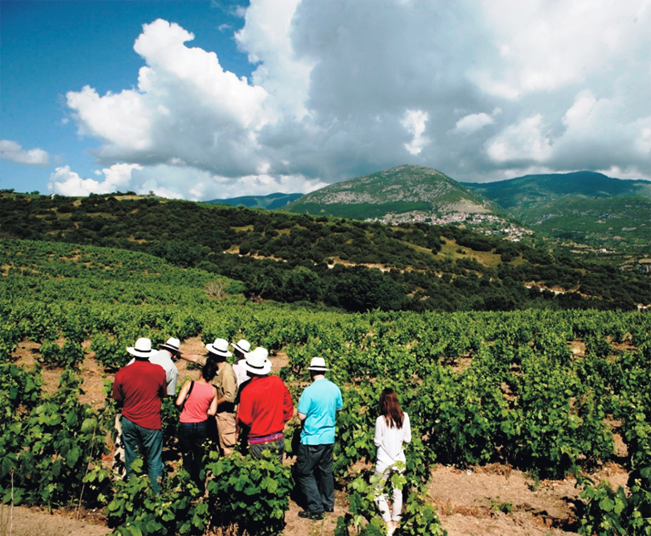 12 Day Wine Tour in Northern Greece & Peloponnese, enjoy your stay in wineries
